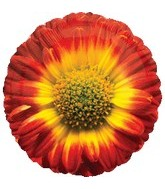 "18"" Red Sunflower Mylar Balloon"